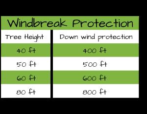 windbreakgraph